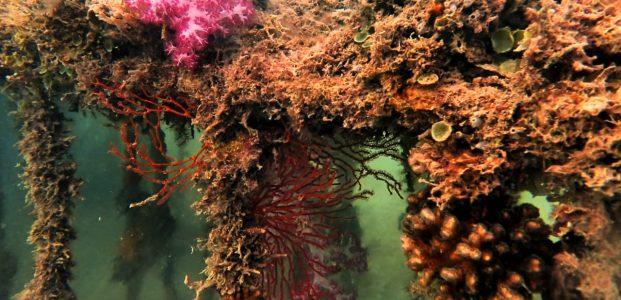 PT Timah Sebar 3.300 Artificial Reef, Reklamasi Laut Bangka