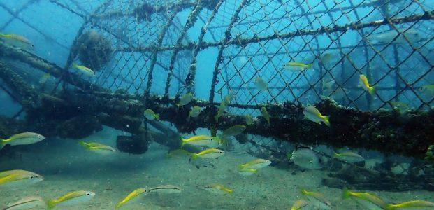 PT Timah Sebar 995 Artificial Reed Untuk Jaga Ekosistem Laut