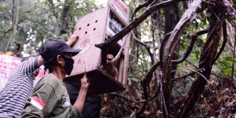 PT Timah Ambil Bagian Memerdekakan Satwa Liar dalam Moment HUT RI ke 75, Kerja Sama Dengan Alobi Foundation